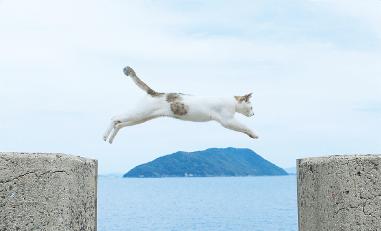 堤防の切れ間をジャンプする猫の画像